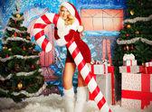 Trees Christmas — Fotografia Stock