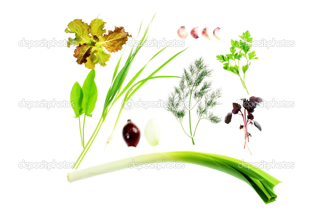 Collection of green herbs isolated over white background. — Foto Stock #18572377