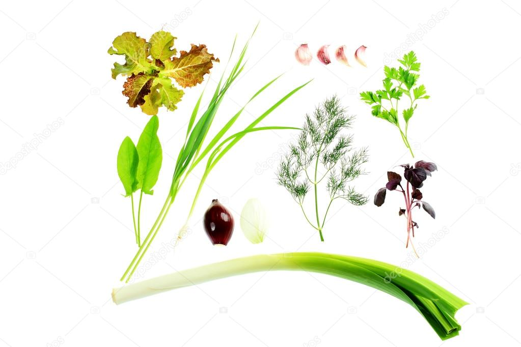 Collection of green herbs isolated over white background. — Photo #18572377
