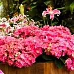 Beautiful flower garden background — Stock Photo #35219395