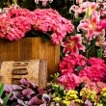 Beautiful flower garden background — Stock Photo #35220333