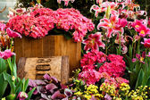 Beautiful flower garden background — Stockfoto