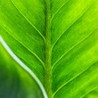Green leaf texture with leaf foreground — 图库照片