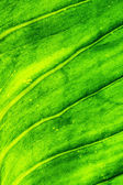 Close-up green leaf texture — Stock Photo