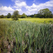 Stock Photo: Wetlands