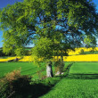 Stock Photo: Crops countryside