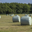 Hay bales in field on farm — Stock Photo #12059665