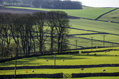 Peak district landscape with fields and dry stone walls — Stock Photo
