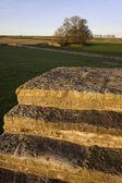 農業登熟農地トウモロコシ畑 — ストック写真