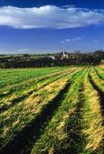 Field — Foto de Stock
