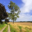 Stock Photo: Field in countryside in rural environment