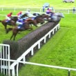 Stock Video: Horses fence