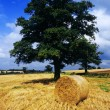 Hay bales - Stock Photo