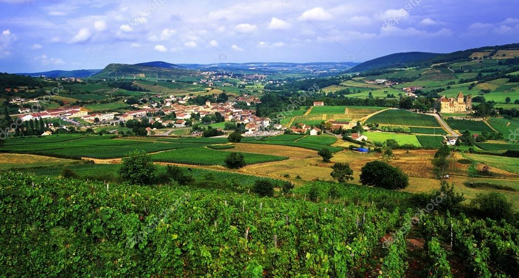 Europe vineyards burgundy france — Stock Photo #20035543