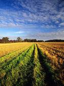 Field — Стоковое фото