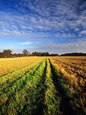 Field — Stok fotoğraf