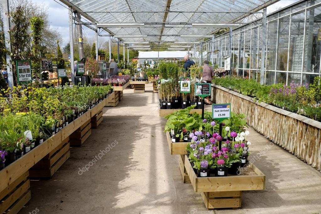 Conifere Piante Da Giardino In Vendita In Vivaio Foto