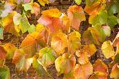 Viejo jardín isabelino — Foto de Stock