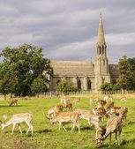 Deers herd grazing — Stock Photo