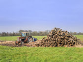 Piles of Timber stacked in a field with Tractor — Stock Photo