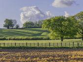 Een veld in het platteland — Stockfoto