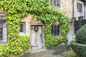 Ancient building door with ivy — Stock Photo