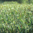 Grass that is green - Stock Photo