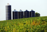 Soybean Farm with silos — Stock Photo