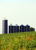 Silos in a soybean field on farm — Stock Photo