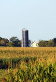 Farm with corn, silo and barn in the country — Stock Photo