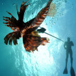Man spearfishing lionfish - Stock Photo