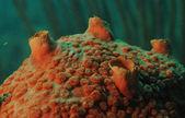 Macro ou close-up da imagem da esponja — Foto Stock