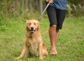 Taking dog for walk — Stockfoto
