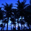 Stock Photo: Palm trees and ocewith blue hue