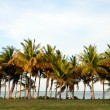 Line of palm trees in tropical destination with nobody — Stock Photo #26155829