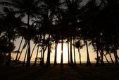 Palm trees on beach — Stock Photo