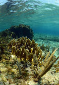 Natural underwater seascape with gorgonian — Stock Photo