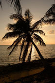 Palm tree silhouette in tropical location — Stock Photo