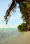 Tropical beach with palm trees and ocean — Stock Photo