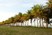 Palm trees and ocean in tropical destination with path — Stock Photo