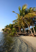 Untouched tropical beach lined with palm trees — Stock Photo