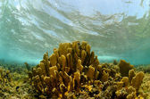 Scenic underwater coral in tropical destination — Stock Photo