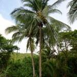 棕榈树与热带目的地椰子 — 图库照片