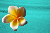 Tropical paradise background with white flower and ocean — Stock Photo