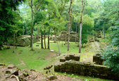 Ancient mayan temple ruins in honduras — Stock Photo