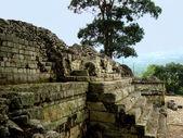 Mayan architecture and copan ruins in Honduras — Stock Photo