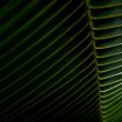 Palm frond background — Stock Photo #33786609