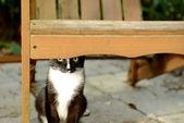 Ukrywanie kot — Zdjęcie stockowe