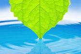 绿色肉质植物叶的水. — 图库照片