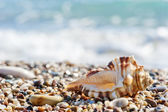 Seashell on sand and pebble beach by the sea. — Stock Photo